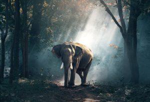 samenwerken met een olifant in de kamer